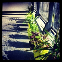 Plants were casting great shadows