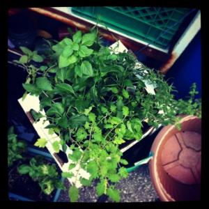 Box of plants.