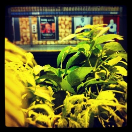 Plants in the subway.