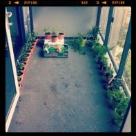 Hopefully something will survive. 11 Jul 2013. Balcony garden #1.