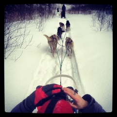 Driver's view of our sled.