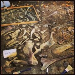 Fossil Display #2 Dinosaur Provincial Park