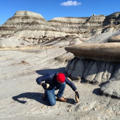 Looking for fossils under a rock.