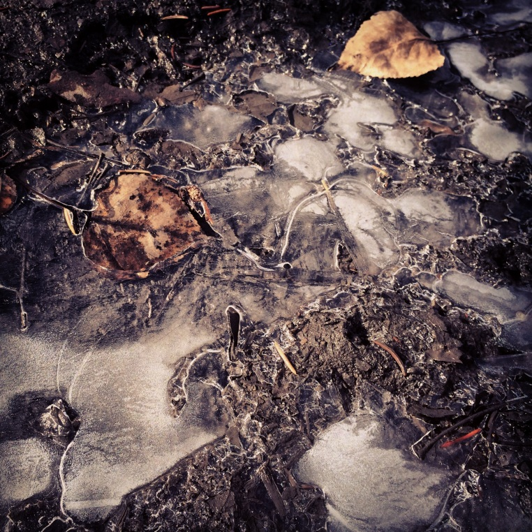 Frozen leaves and mud, Prince's Island, Calgary.