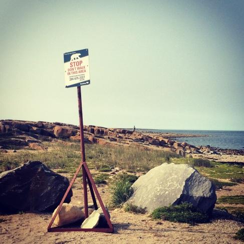 Polar bear warning sign. Churchill, Manitoba.