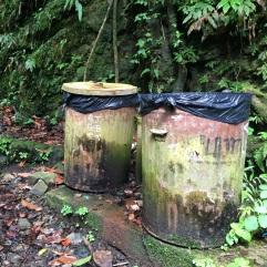 El Yunque rainforest, Puerto Rico.