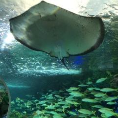 Toronto Aquarium.v