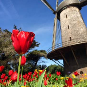Dutch Windmill, Golden Gate Park, San Francisco.