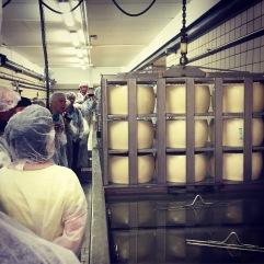 Brine bath. Parmigiano-Reggiano D.O.P. factory, Modena, Italia.
