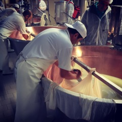 Cutting the curd block into two. Parmigiano-Reggiano D.O.P. factory, Modena, Italia.