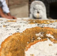 Lichen. Ercolano, Italy
