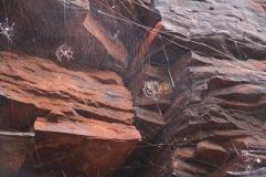 Spiders and webs. Kalamina Gorge. Karijini, Western Australia.